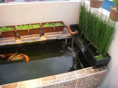 Mini Koi Pond Youtube