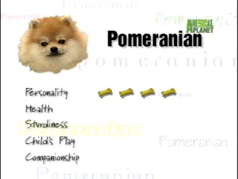 Breed All About It - Pomeranian
