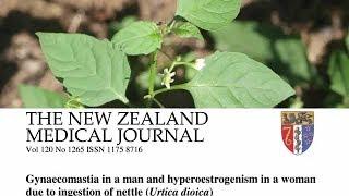 Nové poznatky o bylinných čajích: kopřiva a rooibos