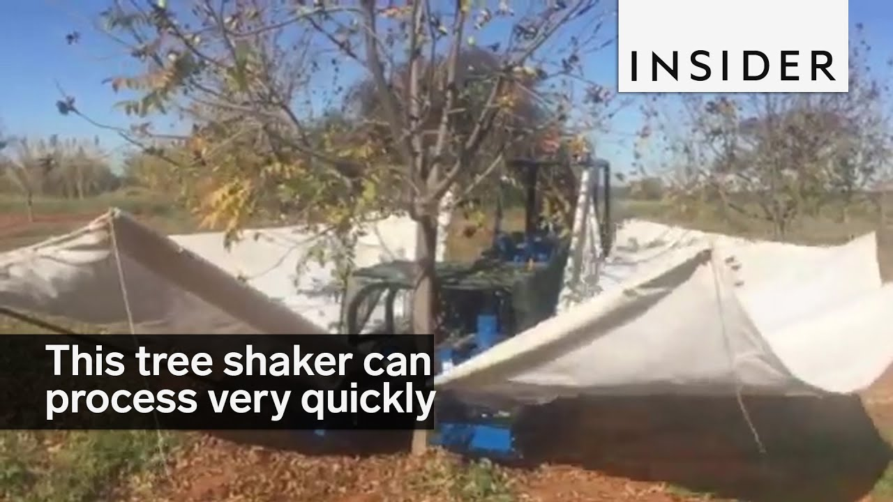 This tree shaker processes up to 60 trees an hour