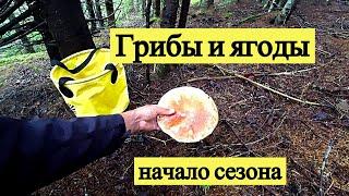 Грибы и ягоды, начало сезона