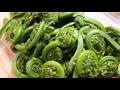 MENAKJUBKAN!! Manfaat Sayur Pakis Bagi Kesehatan