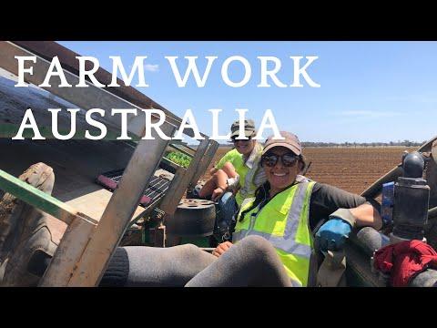 3 Months Of Farm Work In Australia