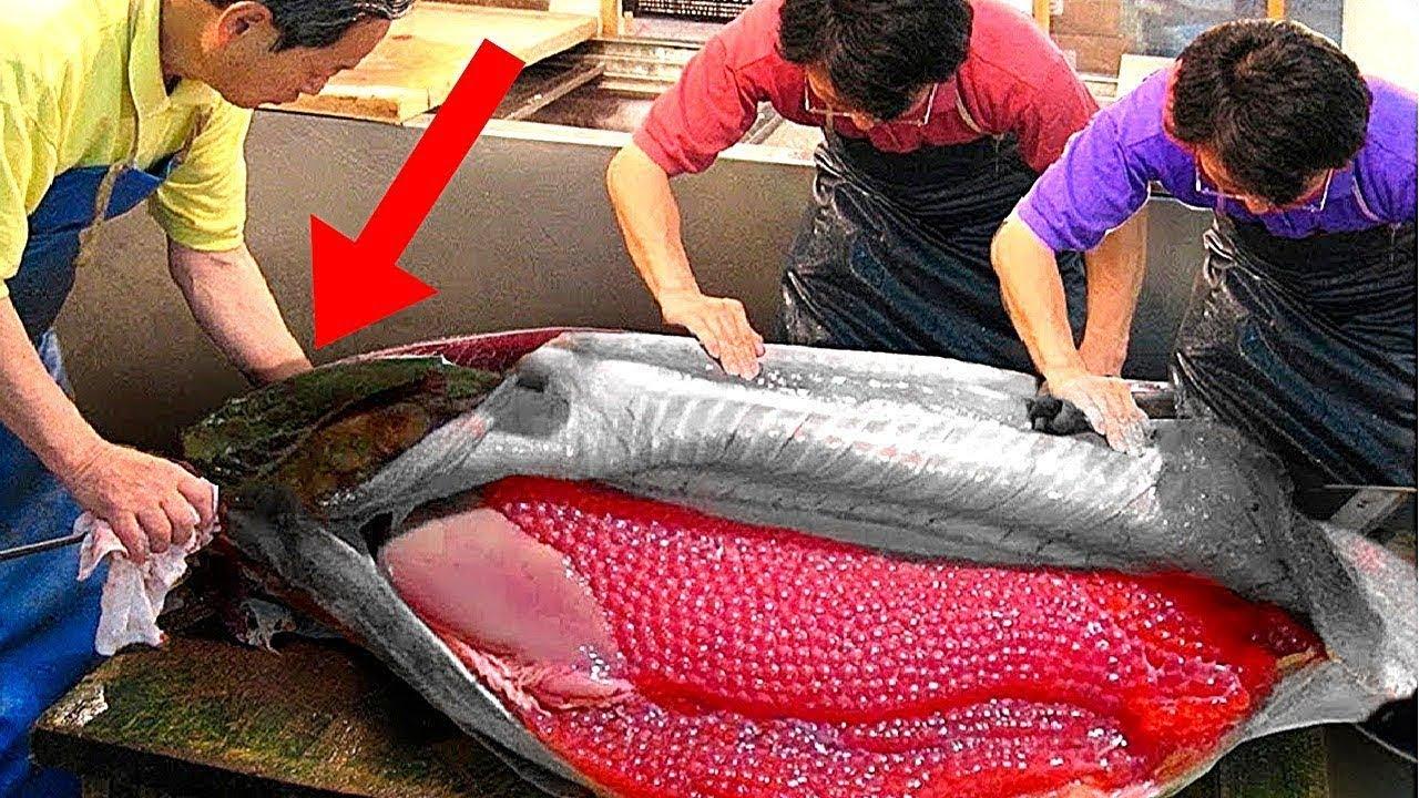 هل تعلم طريقة  استخراج الكافيار من الأسماك ولماذا سعره غال للغاية ؟