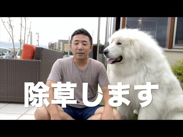 愛犬に無害な安全な除草方法のご紹介