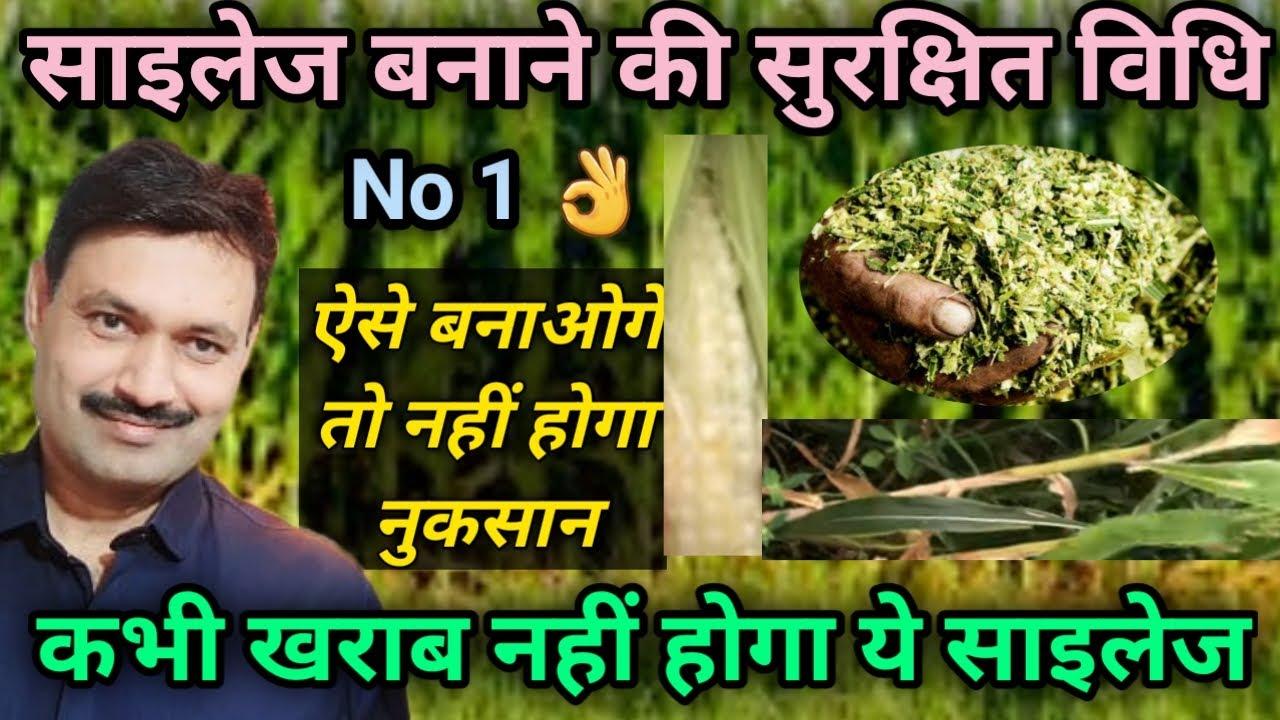 Download Silage Kaise Banaye साइलेज बनाने का तरीका विधि Sailej banane ka tarika vidhi साइलेज कैसे बनाएं