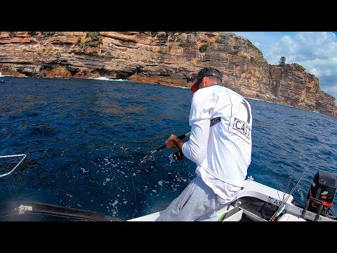 Huge Tailor & Kingfish - Fishing North Heads Sydney, Australia