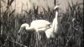 Биол, Животн, Экологические группы птиц