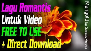 Lagu Romantis Percintaan Pernikahan Untuk Video - Marigold - Quincas Moreira (+ direct download)