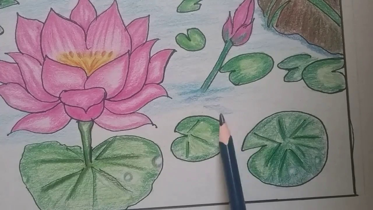 How to draw lotus pond, colour pencil shading for kids ...