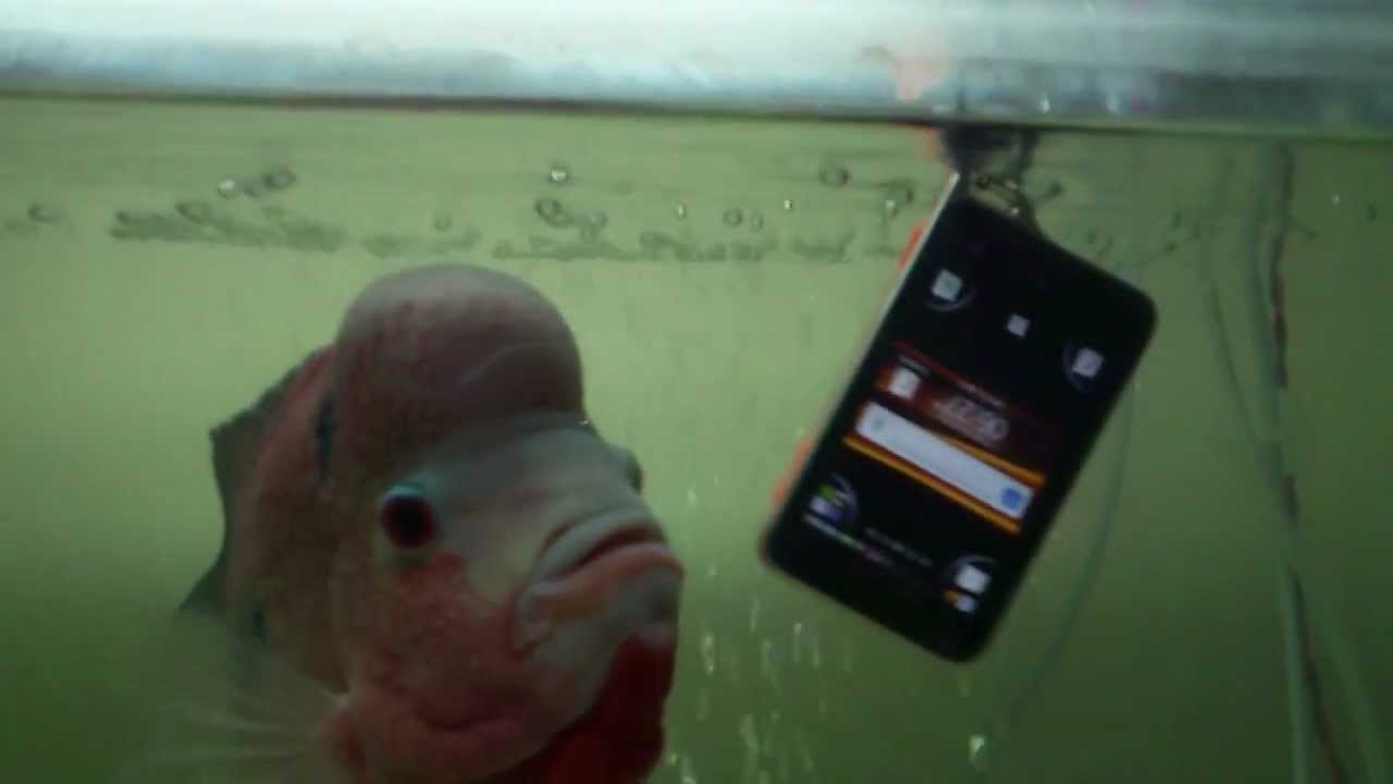 Aquarium fish tank in chennai - Xperia Active In My Fish Tank By Sees Chennai Meeran