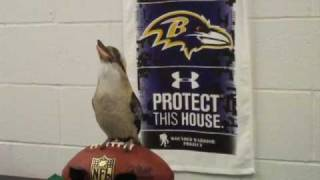 When Maryland Zoo Animals Dream... about the Playoffs