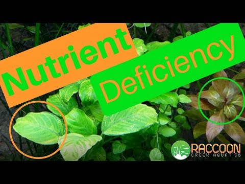 How I Diagnosed And Fixed NUTRIENT DEFICIENCY In My AQUARIUM PLANTS