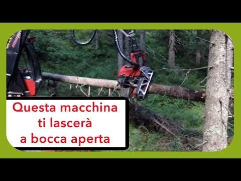 Distrugge Le Foreste In Pochi Secondi (a Fin Di Bene)!