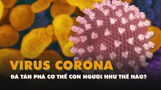 Virus corona đã tàn phá cơ thể con người như thế nào?