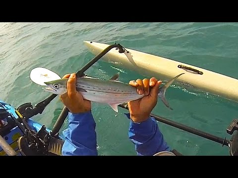 Key west kayak fishing tips cero mackeral for Key west kayak fishing