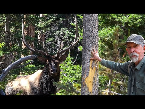 ELK HUNTING In GRIZZLY COUNTRY! -WYOMING PUBLIC LAND
