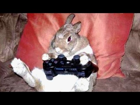 Funniest moments in animal kingdom! Watch and laugh! - Funny animal compilation