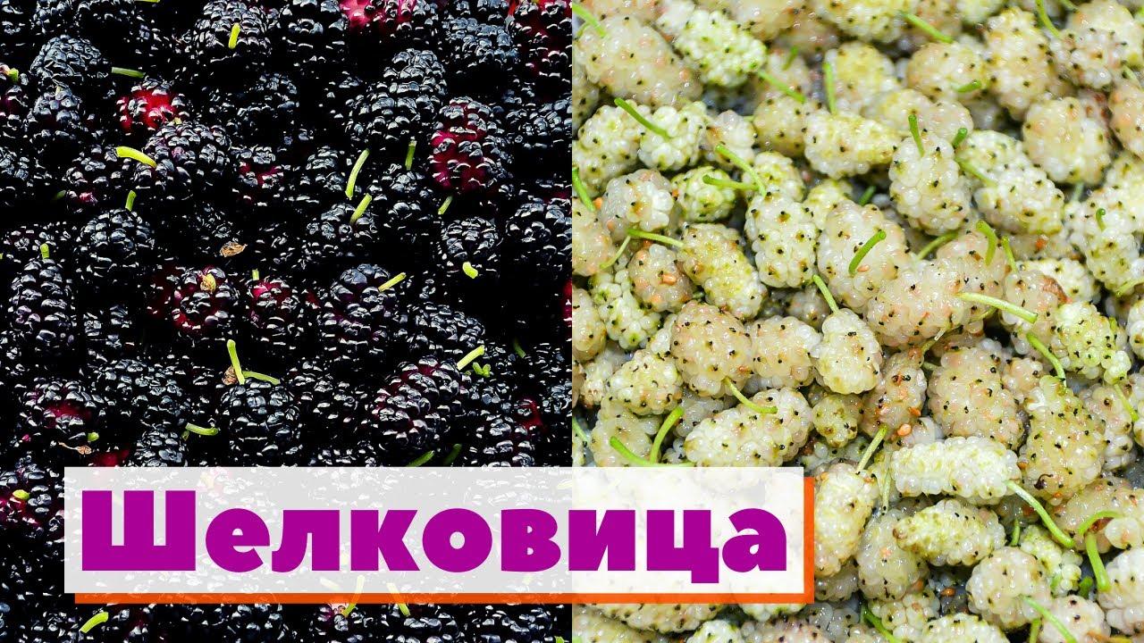 Как это сделано | Шелковица/Тутовник | Mulberry
