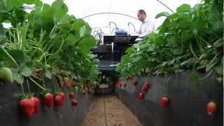 Agrobot Strawberry Harvester