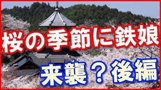 日本の桜は一味違うぞw」うっかりメールに書いてしまったのが発端で・・...