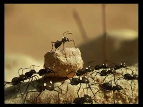 Youtube filmek - Csodabogarak - Lusta hangya (2.évad 8.rész)