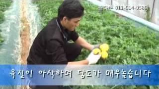 영탁이네 내고향참외 생산현장 동영상