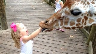 FORGET CATS! Funny KIDS vs ZOO ANIMALS are WAY FUNNIER! - TRY NOT TO LAUGH YouTube Videos