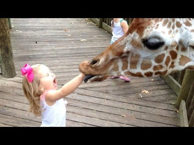 FORGET CATS! Funny KIDS vs ZOO ANIMALS are WAY FUNNIER! – TRY NOT TO LAUGH