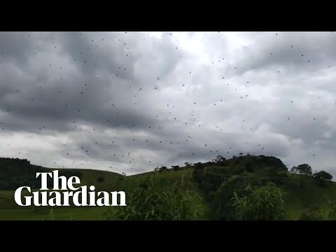 Mix Mornings with Laura Diaz - VIDEO: It's Raining Spiders In Brazil