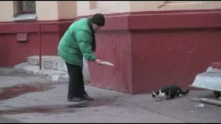 Наталья Фатеева кормит кошек