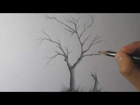 How to Draw a Tree and Birds With Pencil Step by Step - Timelapse