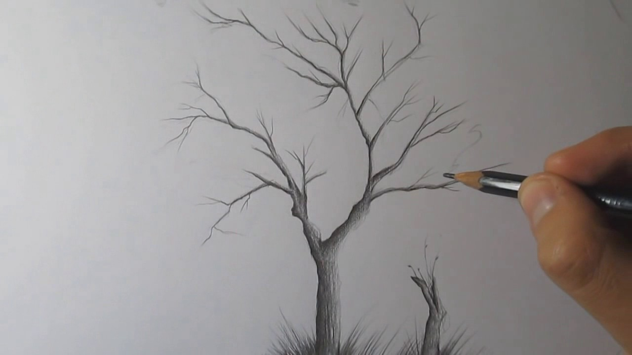 How to draw a tree and birds with pencil step by step timelapse