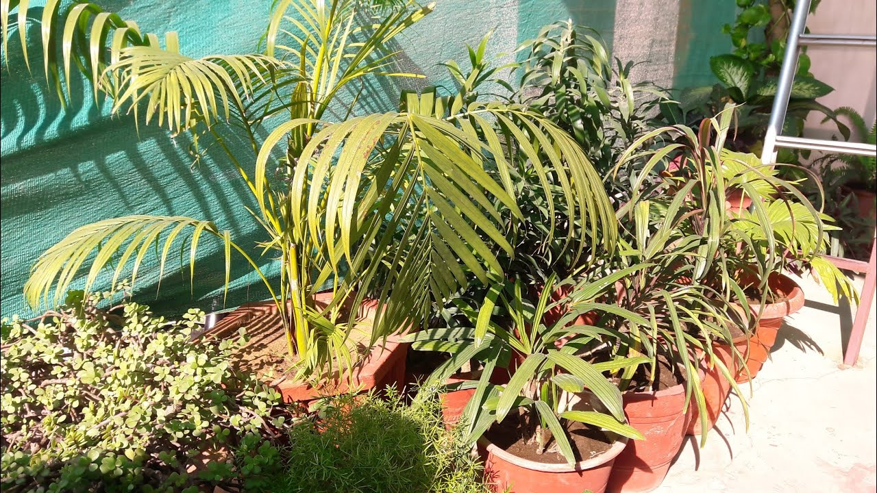 Winter Care Of Plants How To Care For Plants In Winter