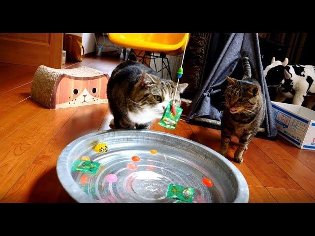 ねこと水遊び-water-play-with-maru