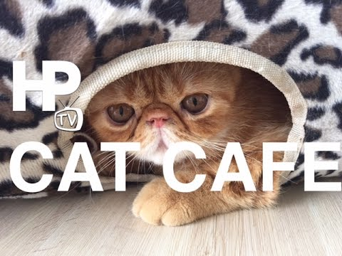 Velvet Friends Cat Cafe Blue Bay Walk Macapacal Avenue Pasay City Manila by HourPhilippines.com