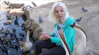 DONNA WITH DUCKS