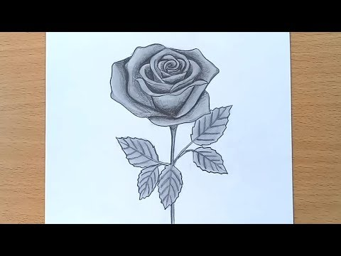 Easy picture of a rose to draw