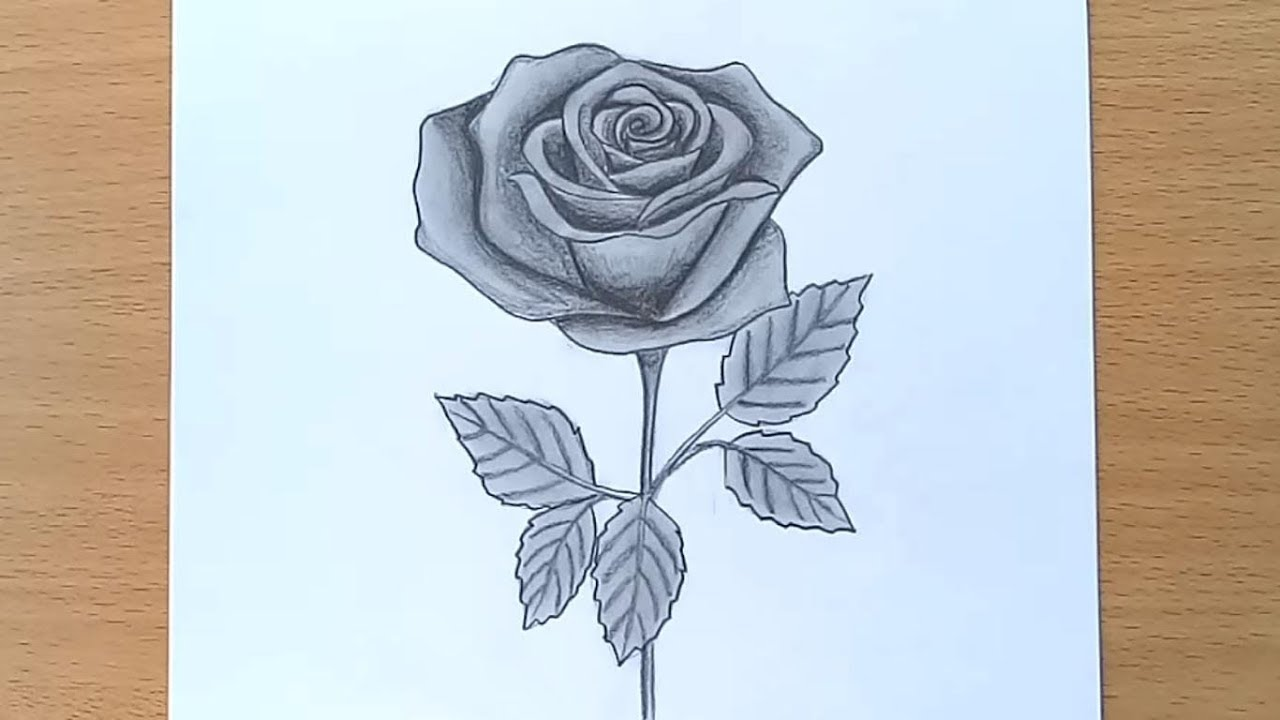How To Draw A Rose Pencil Drawing And Shading Youtube