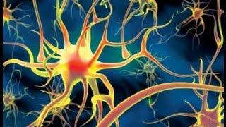 Строение растительной и животной клеток. Уроки биологии.