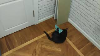 Кот 6 месяцев ночью поймал мышь