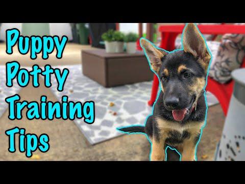 How To Potty Train A German Shepherd Puppy!