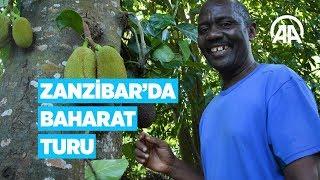 Afrika'nın baharat adasında 'baharat turu'