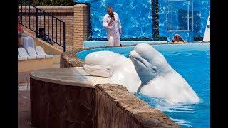 Акватория в Ялте. Театр морских животных.