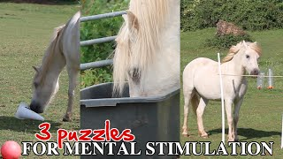 3 puzzles to mentally stimulate your horse