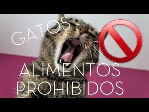 10 alimentos prohibidos para gatos