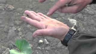 Добывание берёзового дёгтя для использования в качестве репелента(Что делать если вас в лесу закусали комары и у вас нет репелента? Нужно его изготовить. Внимание ! возможны..., 2013-08-27T23:42:27.000Z)