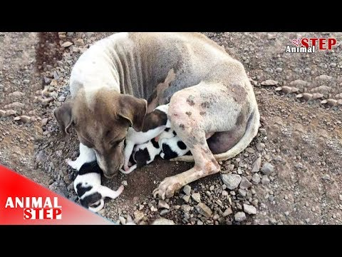 Street Dog Mother and Her Puppies Rescued – Heartwarming!