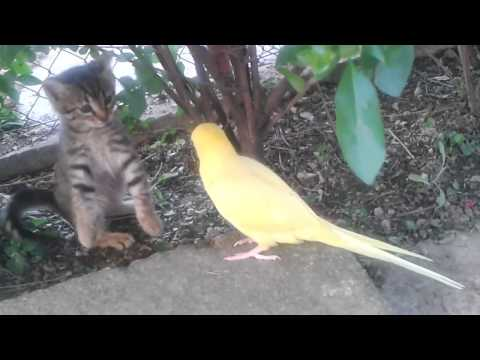 Parrot attempts to befriend cautious kitten