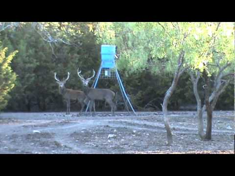 red stag hunting db hunting ranch oatmeal tx 10 2011